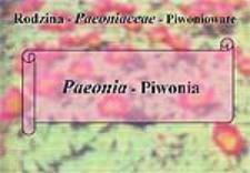 Paeonia - Piwonia